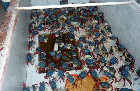 cangrejos rioverde